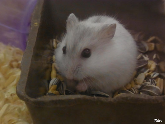 cute_hamster.jpg