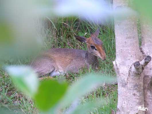 fuji_safari19.jpg