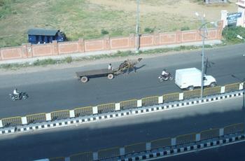 Jaipur_Camel.jpg