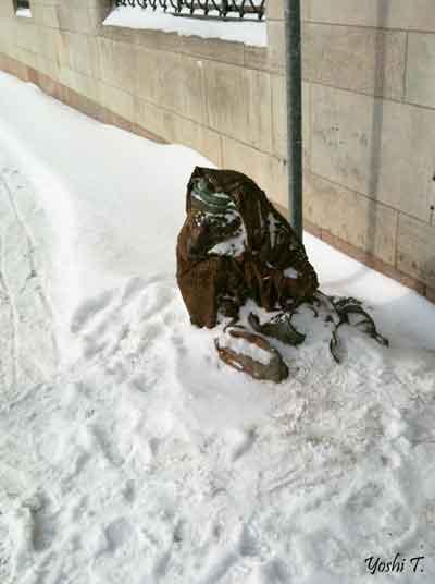 sweden_gamla_stein_fox_winter.jpg